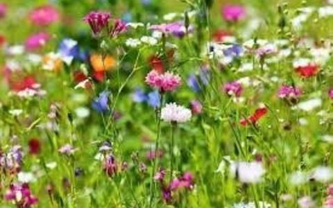 De provincie inventariseert alle initiatieven op het gebied van biodiversiteit.