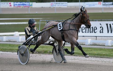 De trainingsrit werd overtuigend gewonnen door trainer/rijder Dion Tesselaar met de driejarige schimmelmerrie Riet Hazelaar (5).