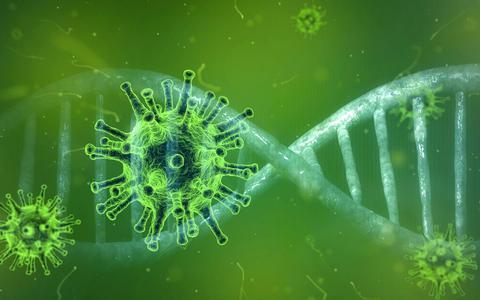 Het coronavirus.